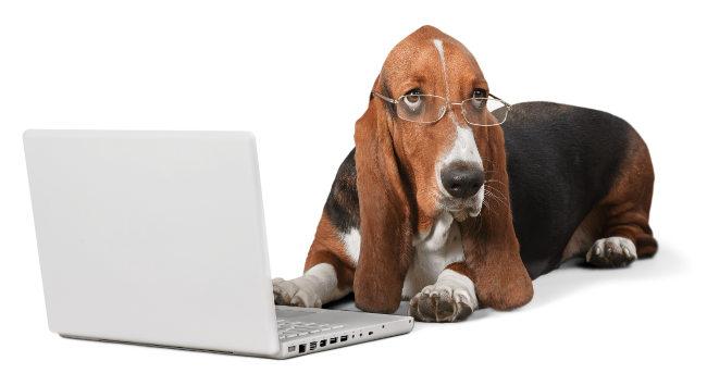 Dog, Computer, Pets.